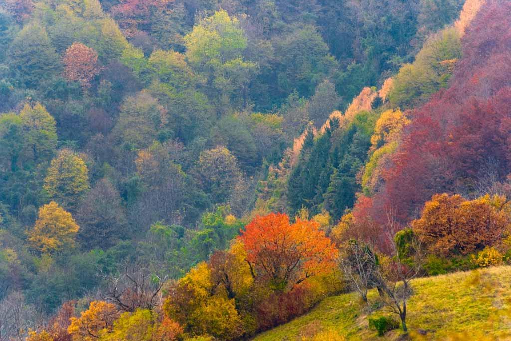 Flora - Foresta del Cansiglio - Pro Loco Fregona